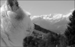 With Your Face Towards The Mountains by Feral-Cats
