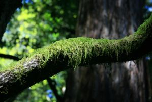Moss on a branch by Dr-J-Zoidberg