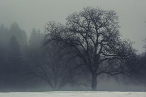 foggy by Mark-Heather