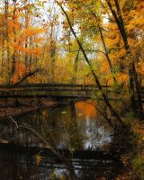 Forest Foot Bridge by S-H-Photography