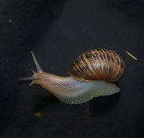 Snail by coorie
