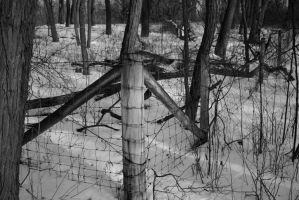 Fence by nwalter