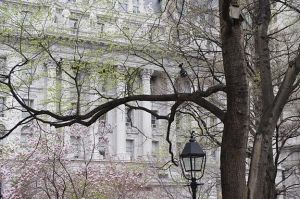 NYC Spring Leaves by vicask