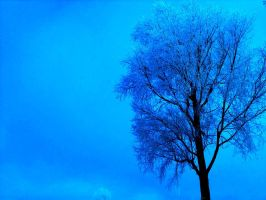 frosted tree v. by JMS296