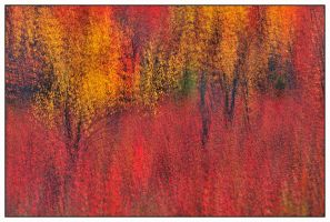 Autumn Brush Strokes by joerossbach