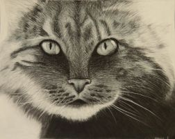 Charcoal cat by iheartart132