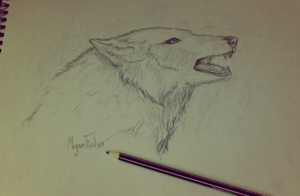 Just a rough sketch of a wolf. by Meganwhitewolf