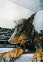 Doberman Portrait by GabrielGrob