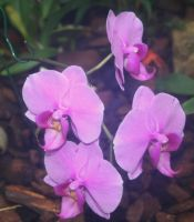 awesome orchids Flora 2 by ingeline-art