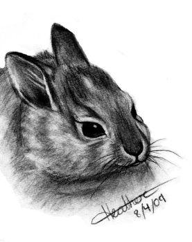 Realistic Bunny by TropicalDreamx
