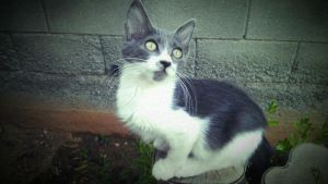 my mustache cat by PeterVsAll