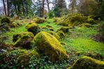 Mossy Grove background stock by little-spacey