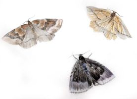 moths by emm4239