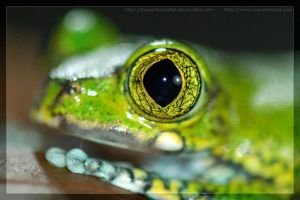 Roux's Eye - Macro by theperfectlestat