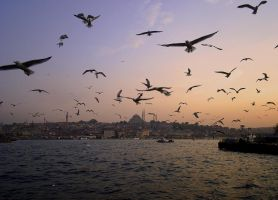 Istanbul Under my wings by kavsikuzah
