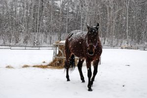 Horse in the snow 01 by LucieG-Stock