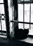 Berlin Impressions from the 90s - the cat by RockinTiger