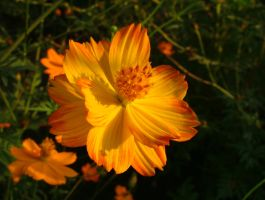 orange and yellow glory by crumpledjoe