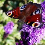 Butterfly by POTOLassie