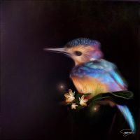 African Pygmy Kingfisher by MoniqueVS