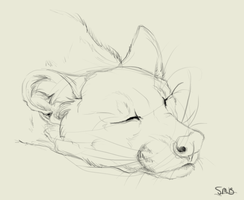 Fossa Sketch by nightspiritwing