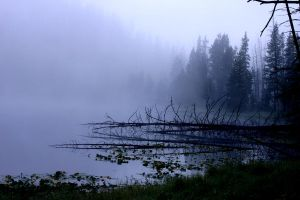 Fog in Yellowstone by wildfotog