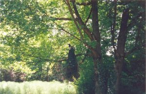 A peacock on a tree by GammaLykos