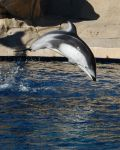 Stock 109 - Dolphin Jumping by pink-stock