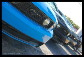 Mustang Row by ladylucrezia