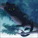 Panther Kitty by tigon