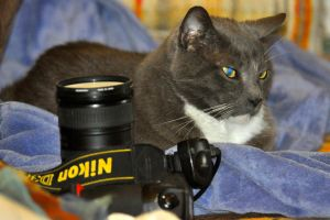 01- My Other Cam is Also a Nikon! by JoeCorreia