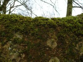 moss by two-ladies-stocks