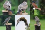 Birds of prey Stock by nexus35-Stock