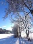 Winter wonderland by MorgainePendragon