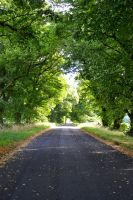 Tree lined road by DesuDan