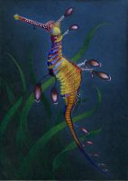 Weedy Sea Dragon by tesskou