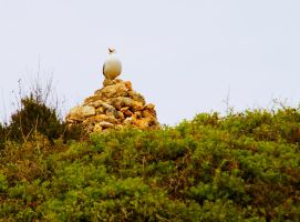 King of the Hill by gendosplace