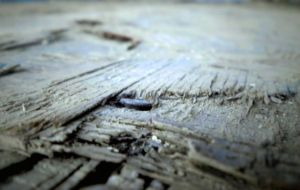 planks by sisila1