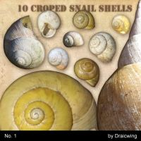 croped snail shells 1 by Draicwing