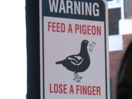Feed a Pigeon, Loose a Finger by MadMeeperPhotos