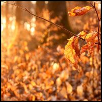 Last leaves of autumn by JoInnovate