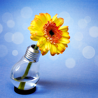 an idea blooms by st3rn1