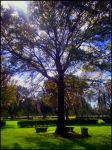 A Seat under the Tree by thelivingcorpse