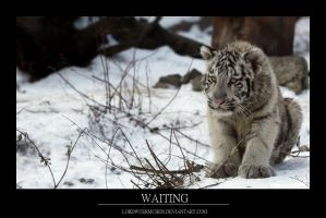 Waiting by AF--Photography