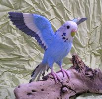 budgerigar by ellis-animals