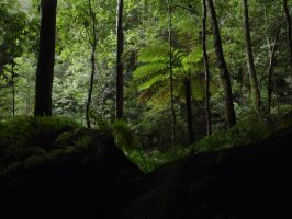 Tree Ferns by Weatbix