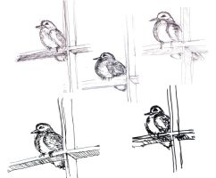 Little bird at my window (sketches) by MauricioKanno