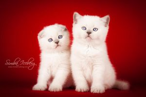 Brother and Sister by Katrin-Elizabeth