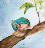 Colorful snail by stokrotas