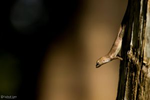 Brown anole with shadows by CyclicalCore